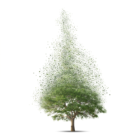 disintegrate: Tree over white background