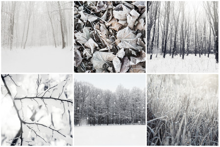 winter photos: Collage of winter photos with snow. Beauty nature background