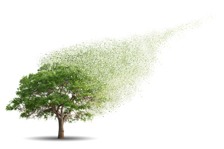 disintegrate: Tree isolated over white background Stock Photo