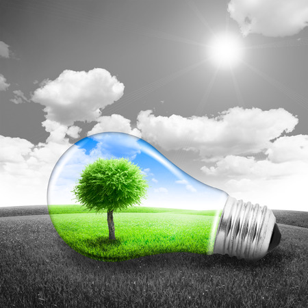 growing inside: Lightbulb with a tree growing inside in field. Environment or energy concept background