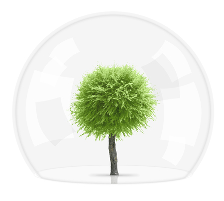 sorbus: A sorbus tree growing under a glass dome in safety