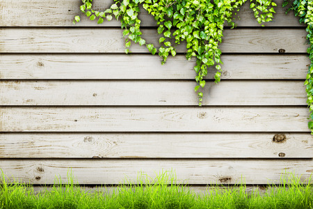 wood grass: Fresh spring green grass and leaf plant over wood fence background