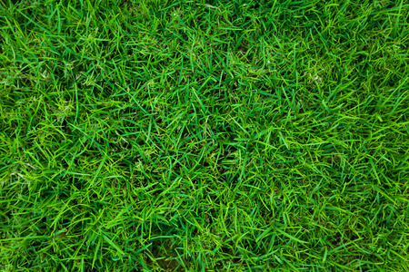 suolo: Green grass natural background. Top view Archivio Fotografico