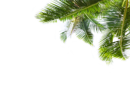 curve: Green palm leaves is isolated over white background