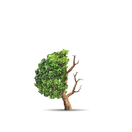 The concept image of ecology. Half alive and half dead tree. Environment concept 스톡 콘텐츠