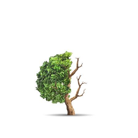 생태학의 개념 이미지입니다. 절반 살아 있고 절반 죽은 나무. 환경 개념 스톡 콘텐츠