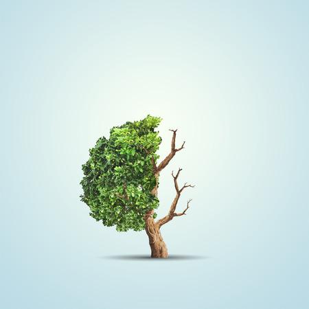 Het conceptbeeld van ecologie. Half levend en half dode boom. Milieu concept Stockfoto