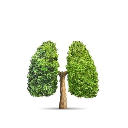 Green tree shaped in human lungs. Conceptual image Stockfoto