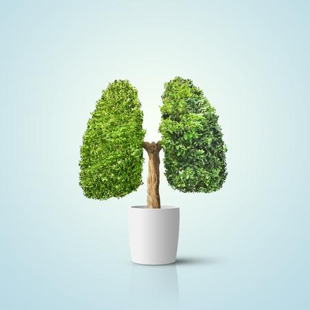 Rbol verde en forma de pulmones humanos. Imagen conceptual Foto de archivo - 95464288