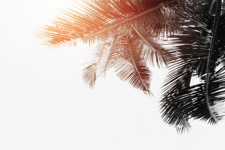Black and white palm leaves is over white paper texture background Reklamní fotografie