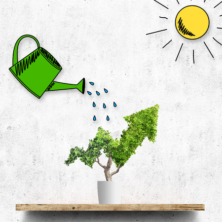 Potted green plant grows up in arrow shape over concrete wall background. Concept business image Imagens