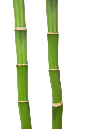 two bamboo stems on white background Stock Photo