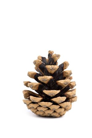 Pine cone on white background Stock Photo