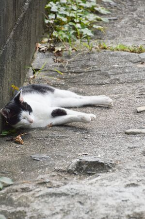 Cat Sleeping At An Onomichi Alley