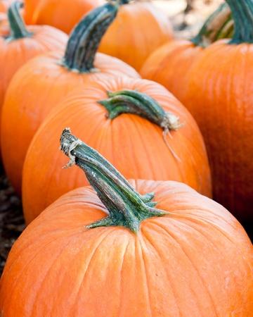 Row of pumpkins.  photo