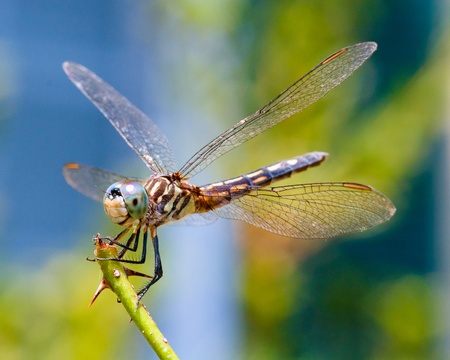 Dragonfly close up  Stockfoto