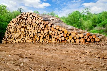 Madera de pino apilados en el patio de la madera Foto de archivo