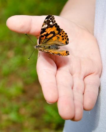 donna farfalla: Concetto di primavera con stretta di bambino che tiene una farfalla painted lady, Vanessa cardui