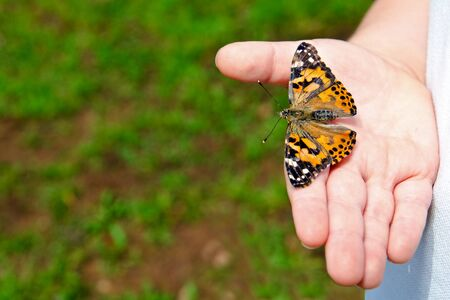 Spring concept with close up of child holding a painted lady butterfly, Vanessa cardui photo