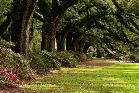 공원 속에서 고대의 오크 나무의 라인
