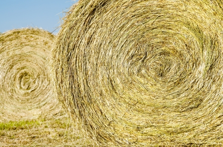 hayroll: Bales of hay in field during spring Stock Photo