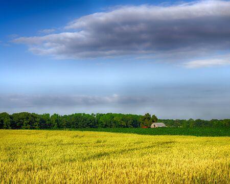 alabama: Wheat and corn growing on farm in northern Alabama