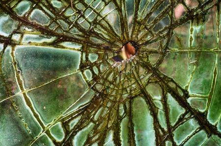 깨진 골동품 유리 모양의 웹