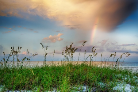 sea oats: Sea oats growing on beach with rainbow and clouds in background at sunrise