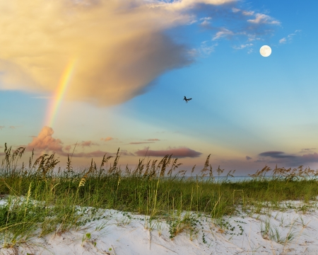 sea oats: Sea oats growing on beach with rainbow, clouds and full moon in background at sunrise