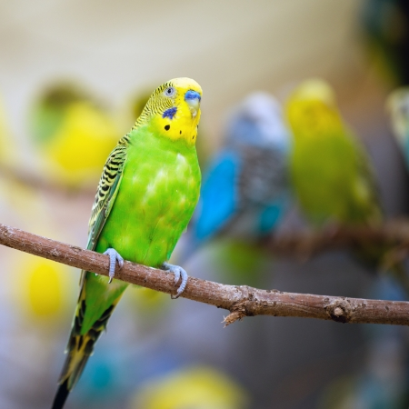 Colorful parakeet resting on tree branch photo
