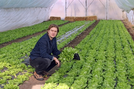 fertile land: Organic farmer holding tray of seedlings in greenhouse. Stock Photo