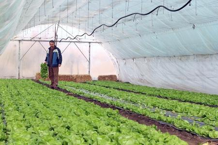Organic farmer holding tray of seedlings in greenhouse. Standard-Bild