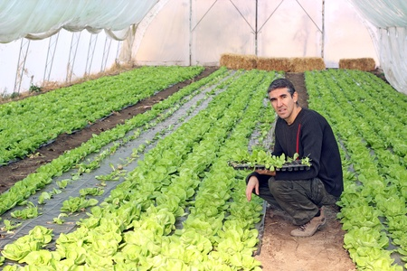 Organic farmer holding tray of seedlings in greenhouse. Stock Photo