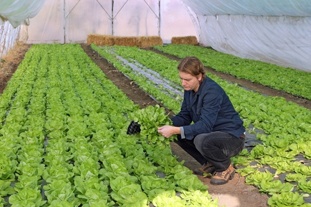 farming village: Organic farmer holding tray of seedlings in greenhouse. Stock Photo