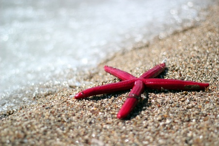 adriatic: Starfish on summer sunny beach  Travel, vacation concepts  Selective focus, Shallow DOF