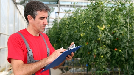bioengineering: Portrait of a man at work in commercial greenhouse  Selective focus