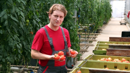 farm worker: Portrait of a farm worker with fresh tomatoes in hands   Stock Photo