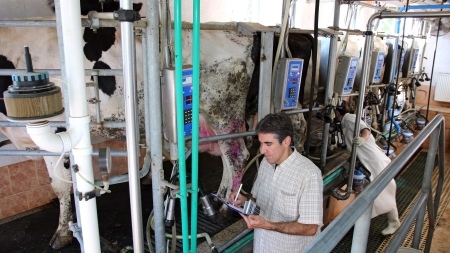 Manager and farm worker at the dairy farm  Stock Photo