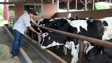 Farmer looking at his cows at dairy farm