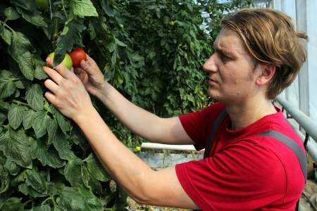 agronomist: Portrait of a greenhouse worker at work