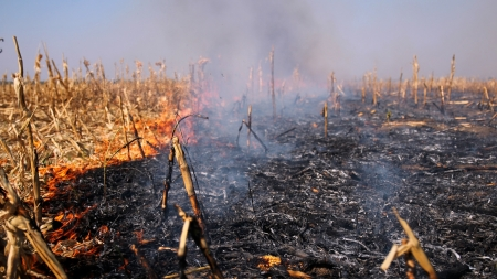 Fire burning on the dried cornfield