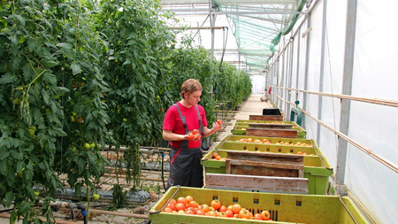 Portrait of a farm worker in commercial greenhouse. photo