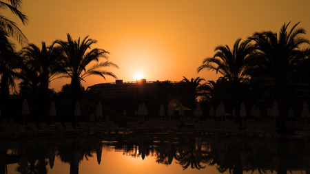 Orange Sunset With Palm Trees and Sun Reflection on Water photo