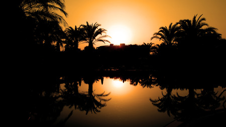 Sunset and Silhouetted Palm Trees Reflected in the Water photo