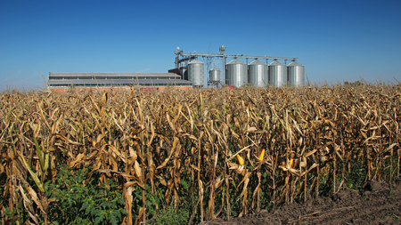 farm building: Modern commercial grain or seed silos in rural landscape. Stock Photo