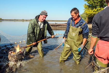 Fish Harvest - Fisherman Retrieves Fishes With Landing Net