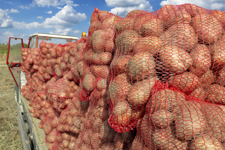 Potato Farming - Pile of Sacks Filled With Potatoes Imagens