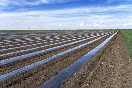 Rows of Vegetable Beds Covered in Plastic Mulch on a Farmland
