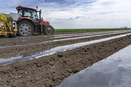 Plastic Mulch Bed Laying for Vegetable Production