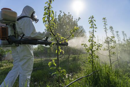 Man in Protective Equipment Spraying Fruit Orchard With Backpack Atomizer Sprayer